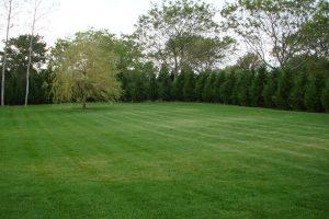 Deer Resistant Plants & Revegetation #1