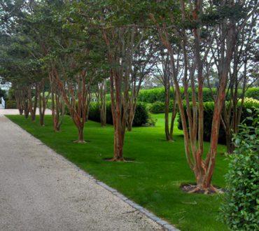 Landscape Design #2