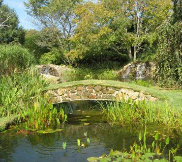 Ponds #1