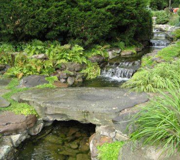 Ponds #5