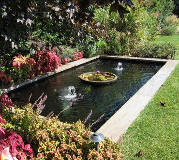 Ponds #7