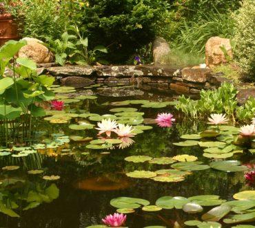 Ponds #8